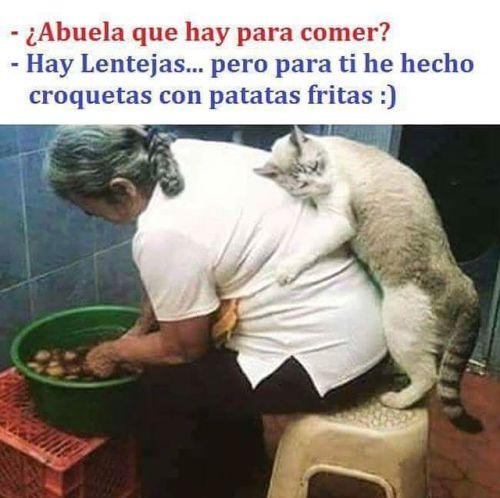 meme de gatito abrazando a una abuelita